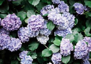 花の写真・画像素材[640818]