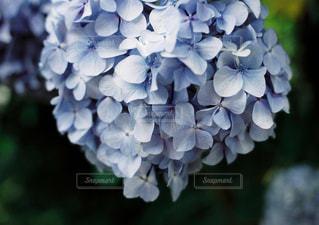 花の写真・画像素材[640820]