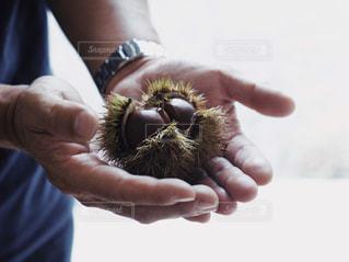 果物を持っている手の写真・画像素材[1469148]
