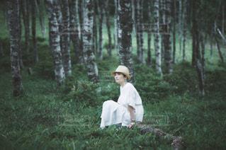 森の写真・画像素材[2355685]