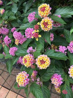 花の写真・画像素材[625245]