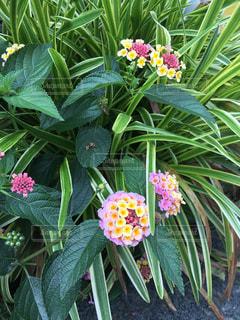 花の写真・画像素材[625252]