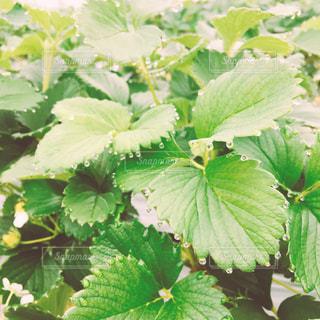 近くの緑の植物を - No.1066369