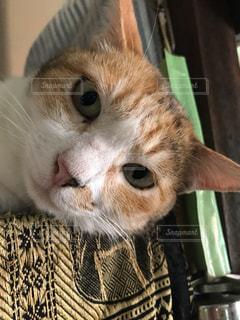 猫の写真・画像素材[973479]