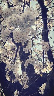 木の花の花瓶 - No.1089255
