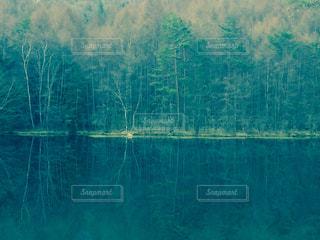 緑の写真・画像素材[626323]