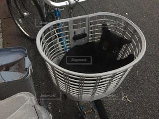 猫の写真・画像素材[202580]