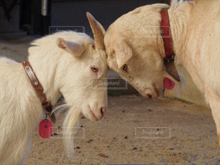 動物の写真・画像素材[637724]