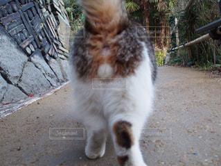 猫の写真・画像素材[637778]