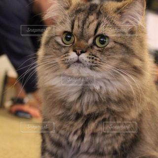 猫 - No.626410