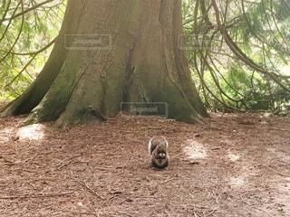 森の中の小さな動物の写真・画像素材[3104195]