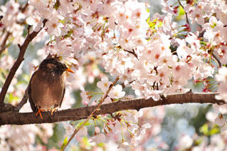 カラフルな鳥が木の枝に止まってください。の写真・画像素材[1120915]