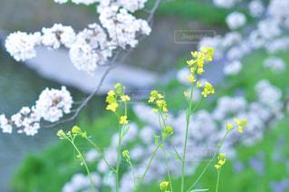 近くの花のアップの写真・画像素材[1120917]