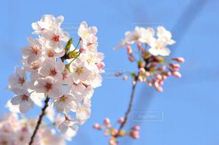 近くの花のアップの写真・画像素材[1120918]