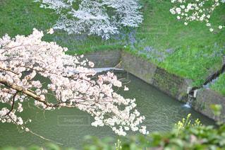 水の体の横にあるツリーの写真・画像素材[1120919]