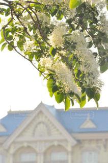 木の枝に花の花瓶の写真・画像素材[1135649]
