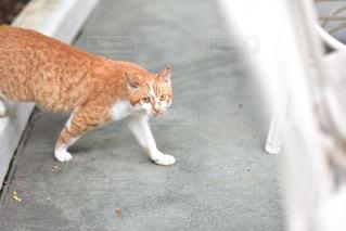 路上を歩く猫の写真・画像素材[1143538]