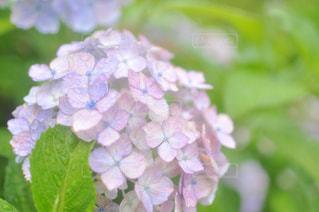 近くの花のアップの写真・画像素材[1244978]