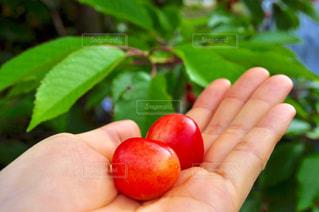 リンゴを持っている手の写真・画像素材[1244980]