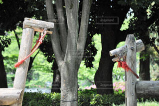公園の木製ベンチの写真・画像素材[1247181]