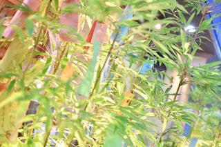 近くの木のアップの写真・画像素材[1286644]
