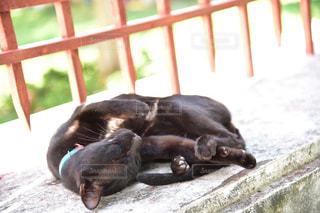 ベッドの上で横になっている猫の写真・画像素材[1297348]