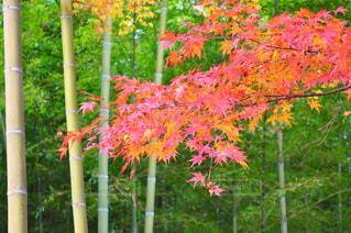 秋の写真・画像素材[1421256]