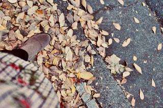 秋の写真・画像素材[1421269]
