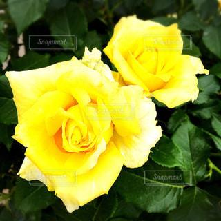 花の写真・画像素材[629446]