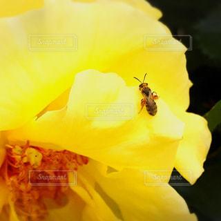 花の写真・画像素材[629447]