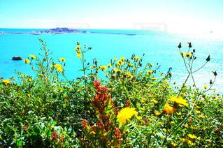色とりどりの花のグループの写真・画像素材[742099]