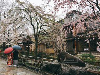 祇園白川の写真・画像素材[627902]