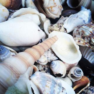 貝殻の写真・画像素材[629582]
