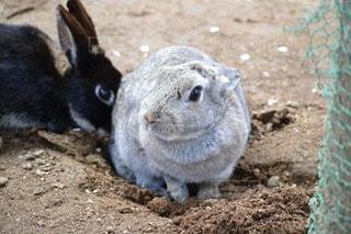 動物の写真・画像素材[23919]