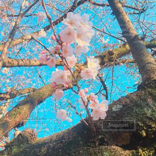 花の写真・画像素材[634527]