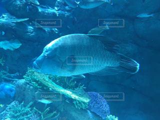魚の写真・画像素材[634810]