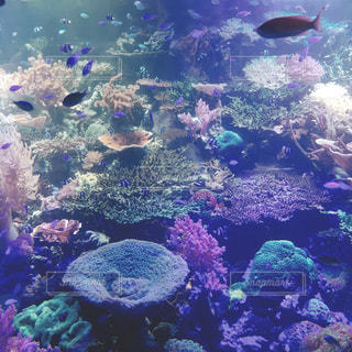 魚の写真・画像素材[634814]