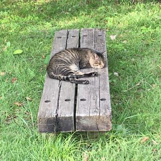 猫の写真・画像素材[634932]