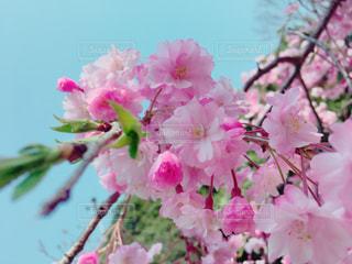 春の写真・画像素材[627246]