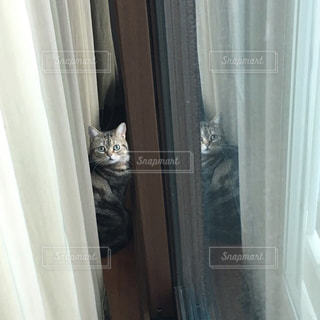 猫の写真・画像素材[627871]