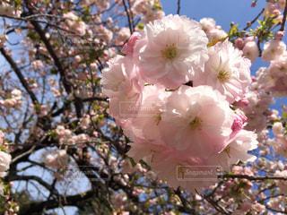 春の写真・画像素材[630304]