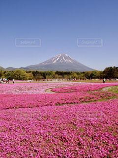 富士山の写真・画像素材[640051]