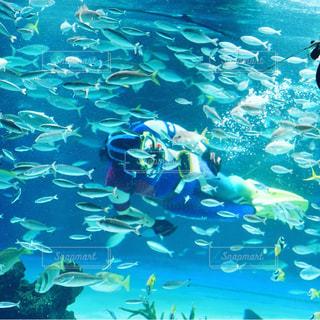 魚の写真・画像素材[627549]