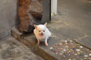 犬の写真・画像素材[638140]