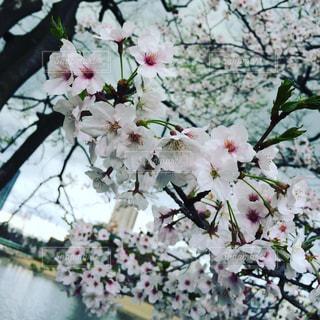 春 - No.627716