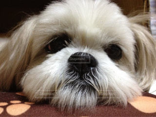 犬の写真・画像素材[637417]
