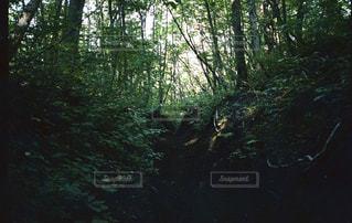 森の写真・画像素材[628056]