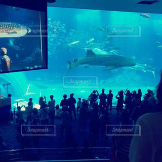 水族館の写真・画像素材[628305]