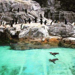 葛西臨海水族園のペンギンプールです。かわいい。の写真・画像素材[1015930]