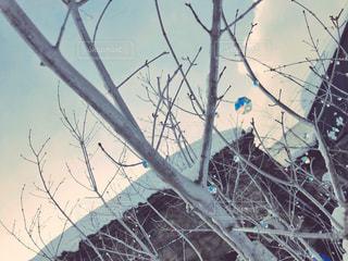 木の枝にとまった鳥の写真・画像素材[1015936]